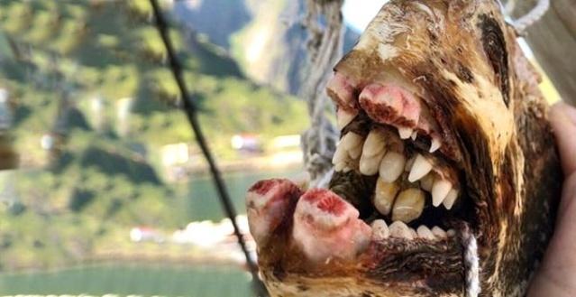 Dünya bağrında keşfedilmemiş binlerce hazine ve canlı saklıyor. Okyanus ve denizden çıkan canlılar ise insanlığı bir hayli hayrete düşürüyor. İşte Rus balıkçının ağına takılan ilginç deniz canlıları.  Rusya'nın Murmansk şehrinde yaşayan ve balıkçılık yapan Roman Fedortsov, yakaladığı değişik deniz canlılarının fotoğraflarını çekerek sosyal medya üzerinden paylaşıyor.