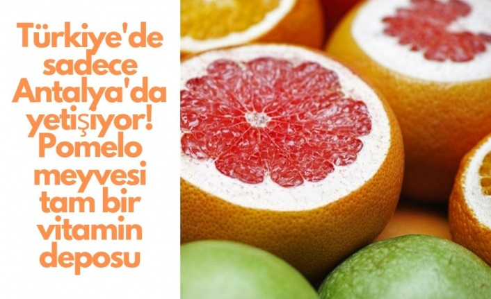 Türkiye'de sadece Antalya'da yetişiyor! Pomelo meyvesi tam bir vitamin deposu