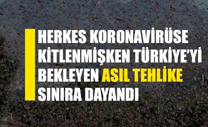 Afrika'yı istila eden çekirge sürüsü, Türkiye sınırına dayandı