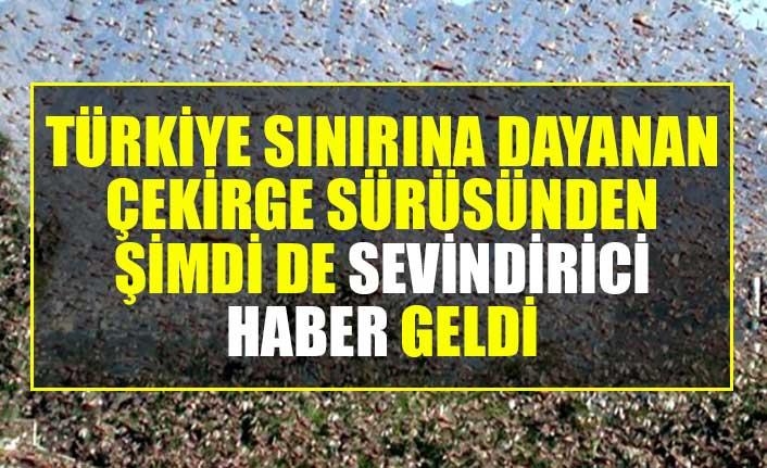 Türkiye sınırına dayanan çekirge sürüsünden şimdi de sevindirici haber geldi