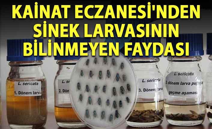 Kainat Eczanesi'nden Sinek larvasının bilinmeyen faydası