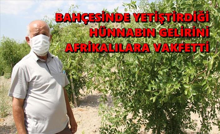 Bahçesinde yetiştirdiği hünnabın gelirini Afrikalılara vakfetti