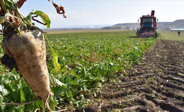 Türkşeker pancar, mısır ve ayçiçeği alımlarına başladı