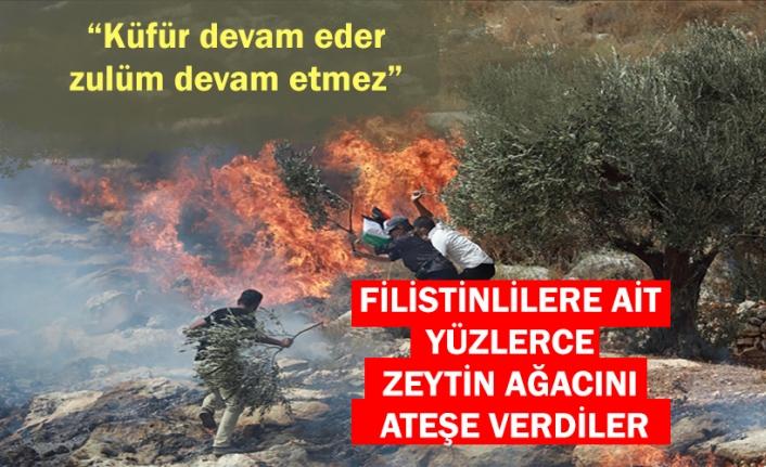 Yahudi yerleşimciler Batı Şeria'da Filistinlilere ait yüzlerce zeytin ağacını ateşe verdi