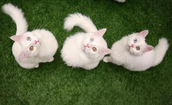 Kedilerin otizmli çocuklar üzerinde olumlu etkisine rastlandı