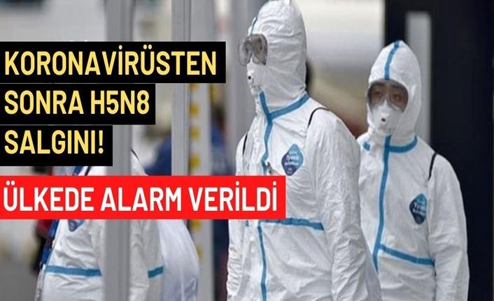 Koronavirüsten sonra H5N8 salgını! Ülkede alarm verildi