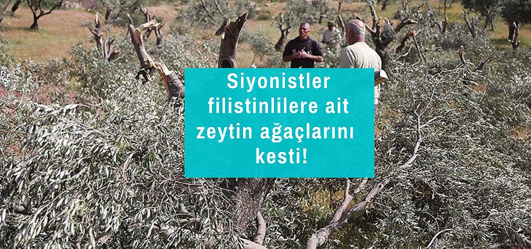 Batı Şeria'da İsrailli yasa dışı yerleşimciler zeytin ağaçlarını kesiyor