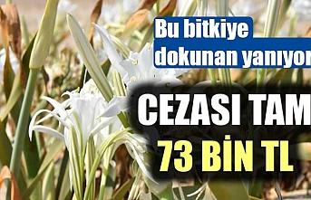 BU BİTKİYE DOKUNAN YANIYOR! CEZASI TAM 73 BİN TL...