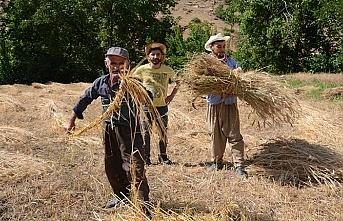 Terörsüz Hakkari'den bereket fışkırıyor: 25 yıl sonra yeniden tarıma başladılar