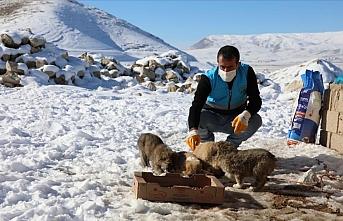 Dondurucu soğuğun etkili olduğu Van'da sokak hayvanlarına yem bırakıldı