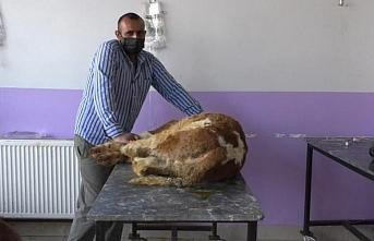 Koronavirüs hayvanları da öldürmeye başladı!