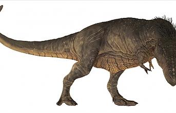 'T-Rex' dinozor türünün bilinmeyen bir özelliği keşfedildi