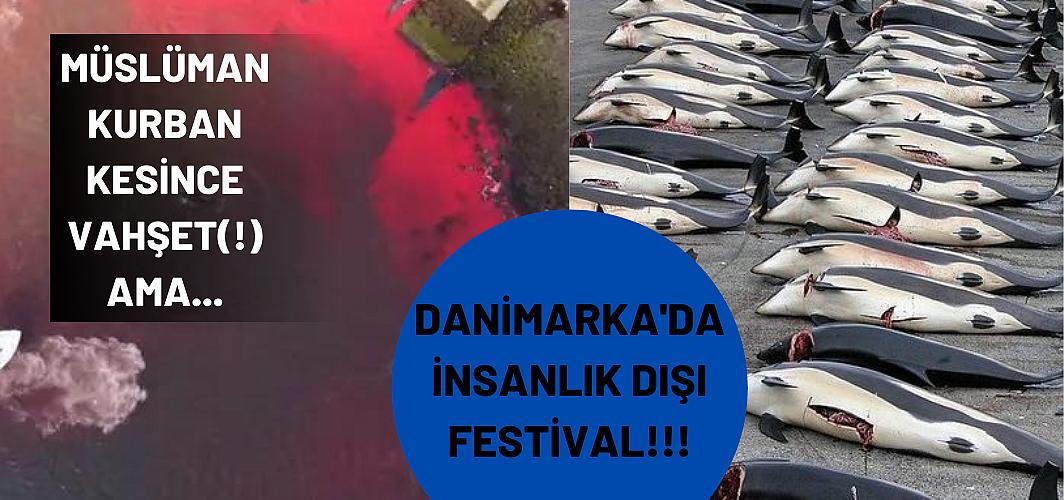 Danimarka'daki festivalde yüzlerce yunus ve balina katledildi