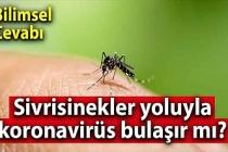 Sivrisinekler yoluyla koronavirüs bulaşır mı?