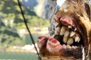 Bu dünyaya ait olamazlar! Rus balıkçının denizden çıkardığı ilginç canlılar görenleri ürküttü