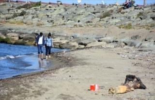 Karadeniz'de deniz çöplerinin araştırması...
