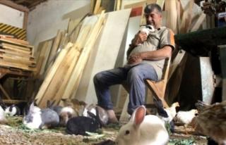 Marangozun örnek tavşan sevgisi