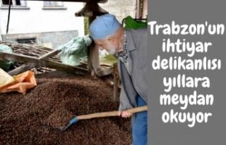Trabzon'un ihtiyar delikanlısı yıllara meydan...