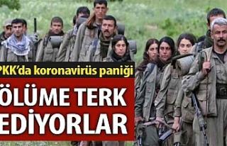 PKK'da koronavirüse yakalanan teröristler kaderlerine...