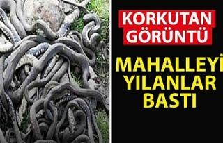 Korkutan görüntü! Mahalleyi yılanlar bastı