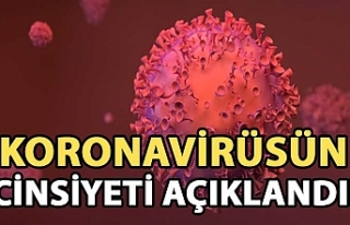 Koronavirüsün cinsiyetini açıkladılar!