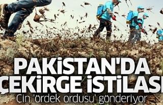PAKİSTAN'DA ÇEKİRGE İSTİLASI NEDENİYLE OHAL...