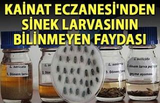 Kainat Eczanesi'nden Sinek larvasının bilinmeyen...