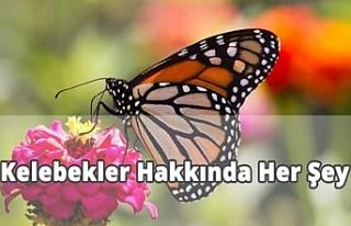 Kelebeklerin Özellikleri Nelerdir?