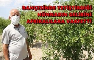 Bahçesinde yetiştirdiği hünnabın gelirini Afrikalılara...