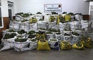 Diyarbakır'da 669 kilo esrar, 510 bin kök kenevir...