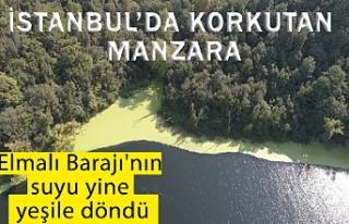 İstanbul'da ürküten manzara; Elmalı Barajı'nın...