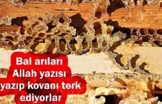 Arı kovanlarının içerisindeki esrarengiz olaylar...