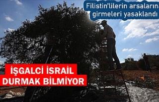 İsrail Filistinlilerin zeytin bahçelerine girmesini...