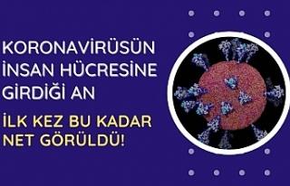 Koronavirüsün insan hücresine girdiği an ilk kez...
