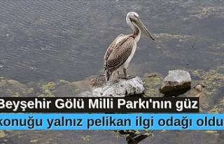 Beyşehir Gölü Milli Parkı'nın güz konuğu...