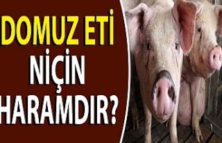 Domuz eti niçin haramdır?