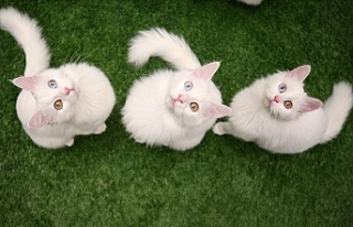 Kedilerin otizmli çocuklar üzerinde olumlu etkisine...