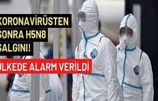Koronavirüsten sonra H5N8 salgını! Ülkede alarm...