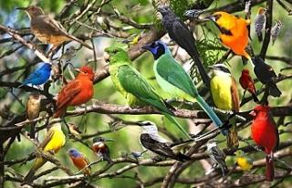 Kuşlar Ne Diyor? Kuşların öterken ne dediğini...
