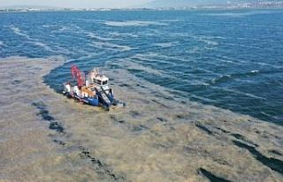 Deniz salyası nedir? Deniz salyası nasıl oluşur,...