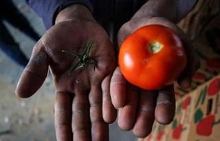 İsrail'den Gazzelilere sapsız domates zulmü