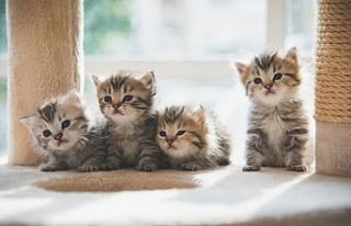 Kedi ve İnsanlar Arasında Beş Farklı İlişki...