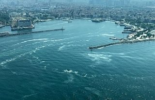 Marmara'nın müsilaj sorununa çözüm : Burslu...