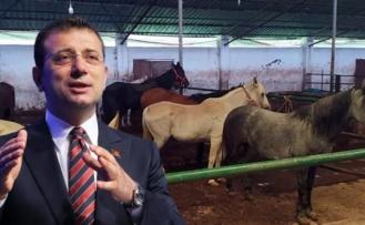 AK Parti'den yeni açıklama: Adalar'da 978 at kayıp