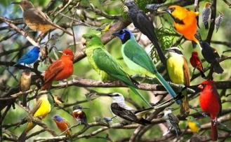Kuşlar Ne Diyor? Kuşların öterken ne dediğini biliyor muydunuz?