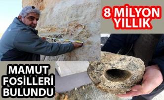 Edirne'deki kum ocağında 8 milyon yıllık mamut fosili bulundu