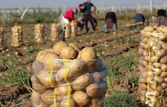 Cumhurbaşkanı Erdoğan'ın talimatıyla çiftçiden alınacak ürünler ücretsiz dağıtılacak