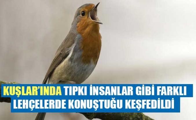 Kuşların da tıpkı insanlar gibi farklı lehçelerde konuştuğu keşfedildi