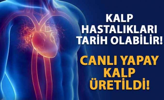 Laboratuvar ortamında canlı insan kalbi üretildi