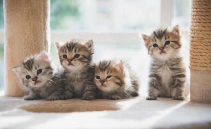Kedi ve İnsanlar Arasında Beş Farklı İlişki Türü Olduğu Ortaya Çıktı